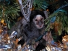 Common Marmoset - Louie in our Christmas tree