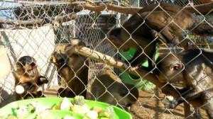 monkey_feeding_time