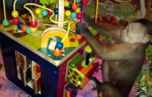 Primate Activity Cube