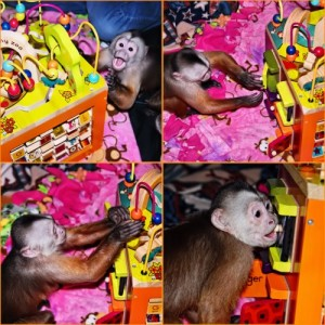primate_enrichment_activity_cube