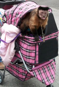 Lighter duty animal stroller
