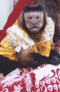 Lost Monkey