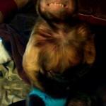 wanne b ealpha capuchin