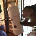 primate enrichment feeder