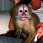 primate rehome