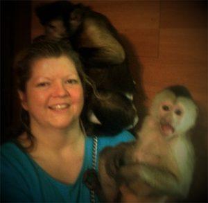 silly capuchin monkeys