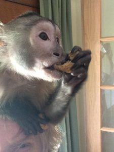 eating monkey biscuits