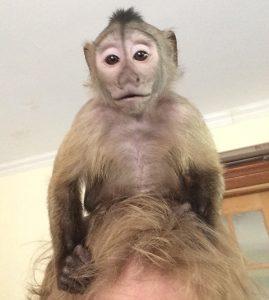monkey riding