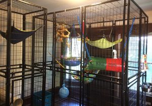 office monkey enclosure