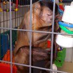 foraging ideas for monkeys