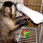 treat tumbler foraging device