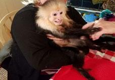 monkey presentation