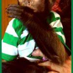 monkey training