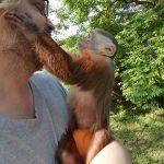 dora capuchin monkey hugs