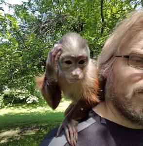 dora cinnamon capuchin