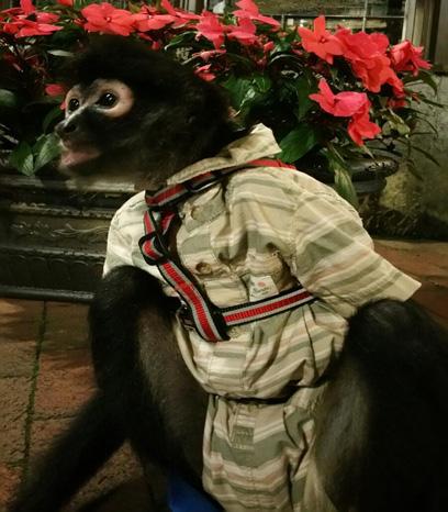 spider monkey harness