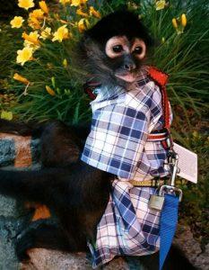 spider monkey safety first harness