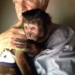 10 year old capuchin monkey
