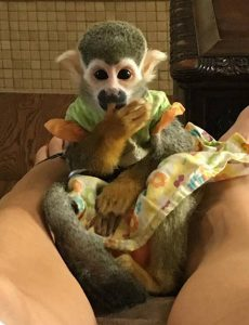 link squirrel monkey