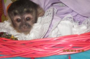 special baby monkey