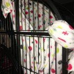 capuchin hammock
