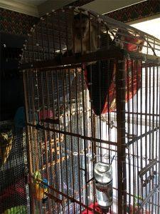 monkey feeding cage