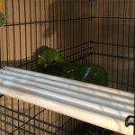 pvc monkey perch