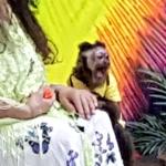monkey road trip