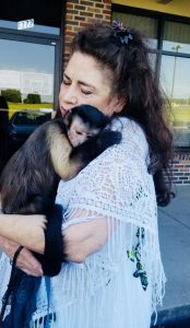 capuchin monkey hug