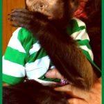 capuchin toddler