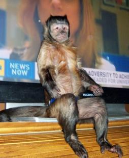 single housed monkey